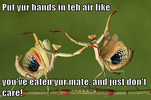 Put yur hands in teh air like  you've eaten yur mate, and just don't care!