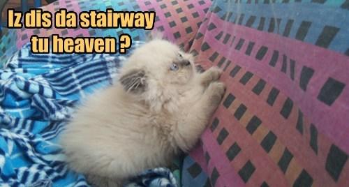 Iz dis da stairway tu heaven ?