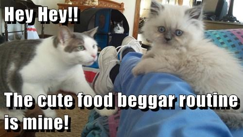 Hey Hey!!  The cute food beggar routine is mine!