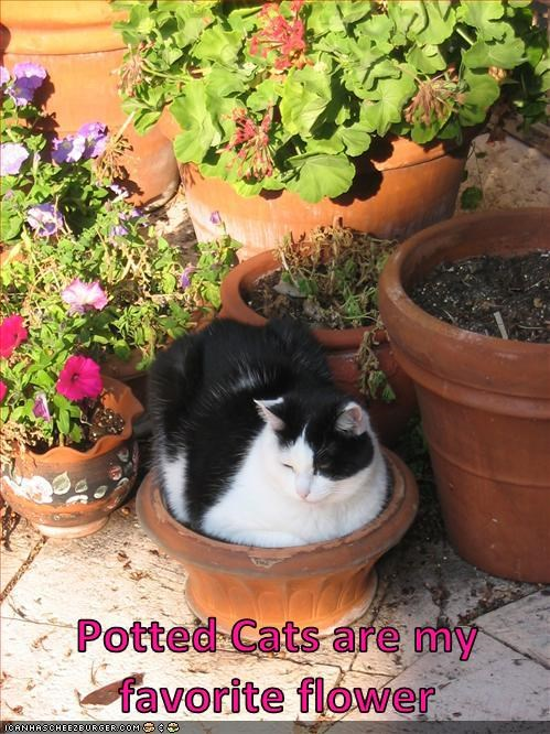 Potted Cats are my favorite flower