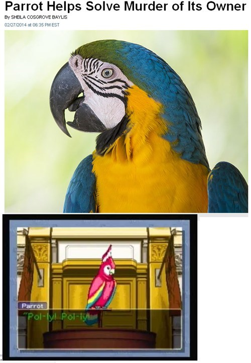 polly,parrots,IRL,phoenix wright