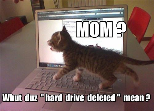 hard drive,whoops,Cats