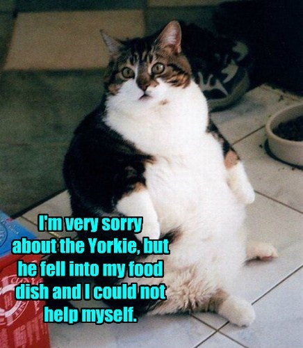 I'm very sorry  about the Yorkie, but he fell into my food dish and I could not help myself.