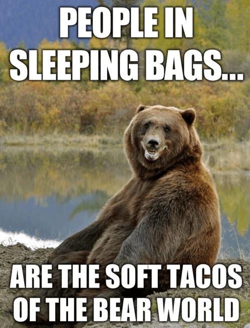 bears,camping,puns,sleeping bags,tacos