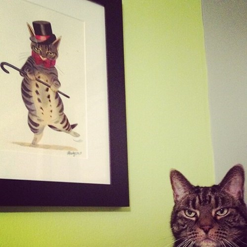 Cats,humiliation,paintings
