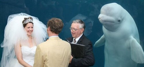 And What is the Porpoise of This Ceremony?