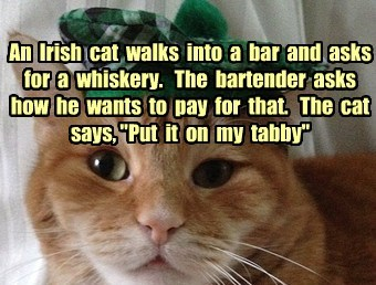 "An  Irish  cat  walks  into  a  bar  and  asks for  a  whiskery.   The  bartender  asks how  he  wants  to  pay  for  that.   The  cat  says, ""Put  it  on  my  tabby"""