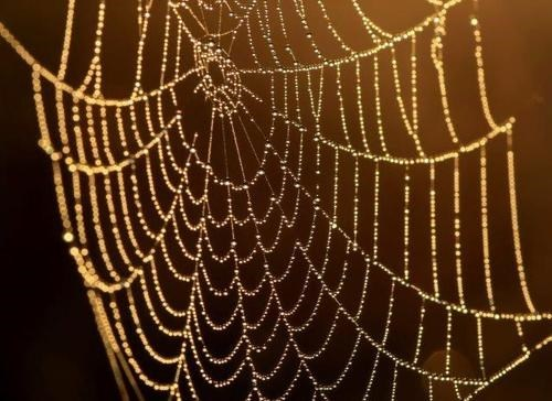 Synthetic Spider Silk, SPIDER-MAN STYLE!