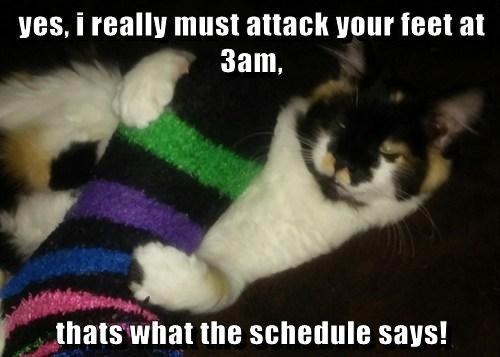 yes, i really must attack your feet at 3am,  thats what the schedule says!