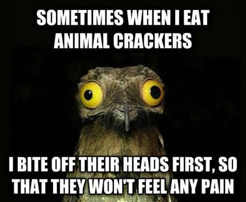 animal crackers,potoo,peculiar potoo