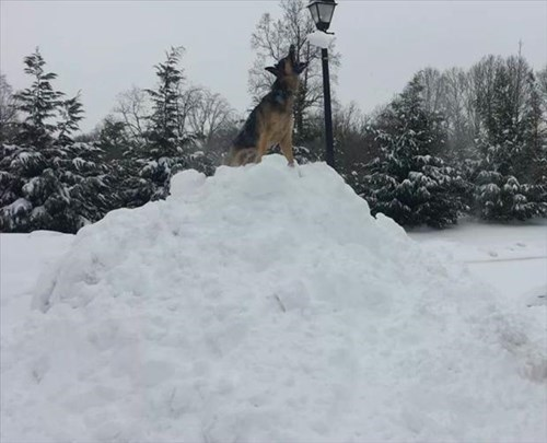 King of the Snow Pile!