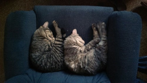 Synchronized Sleeping