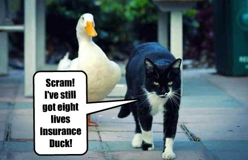 Scram! I've still got eight lives Insurance Duck!