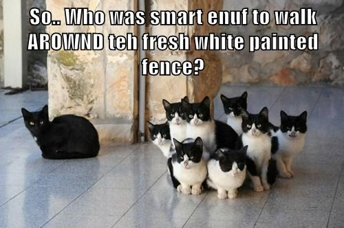 So.. Who was smart enuf to walk AROWND teh fresh white painted fence?