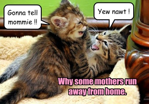 Gonna tell mommie !!