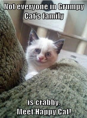 Not everyone in Grumpy Cat's family  is crabby.                                                            Meet Happy Cat!