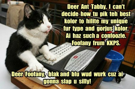 Deer  Ant  Tabby,  I  can't decide  how  tu  pik  teh  best kolor  to  hilite  my  unique  fur  type  and  gorjus  kolor.  Ai  haz  such a  confoozle.  Foofany  frum  KKPS.