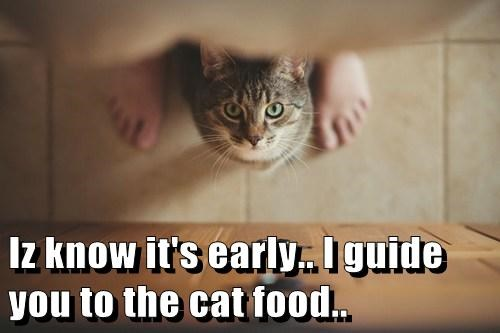Iz know it's early.. I guide you to the cat food..