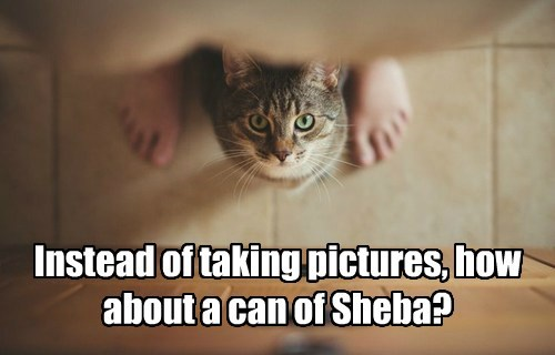Instead of taking pictures, how about a can of Sheba?