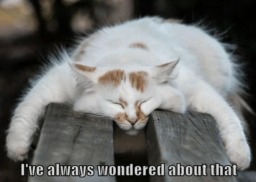 How can you tell if your cat has narcolepsy ?