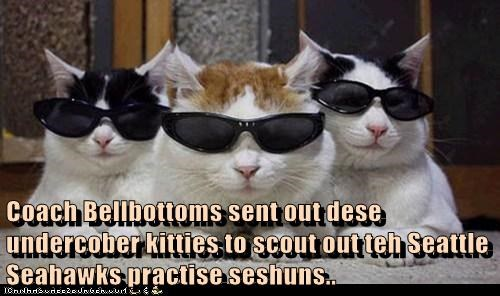Coach Bellbottoms sent out dese undercober kitties to scout out teh Seattle Seahawks practise seshuns..