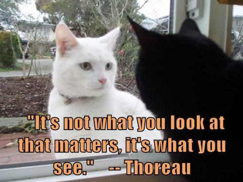 """It's not what you look at that matters, it's what you see.""    -- Thoreau"