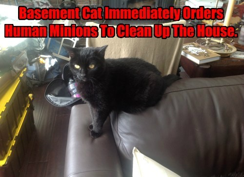 Basement Cat Immediately Orders Human Minions To Clean Up The House.