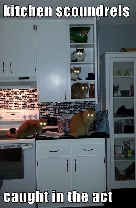 kitchen scoundrels  caught in the act