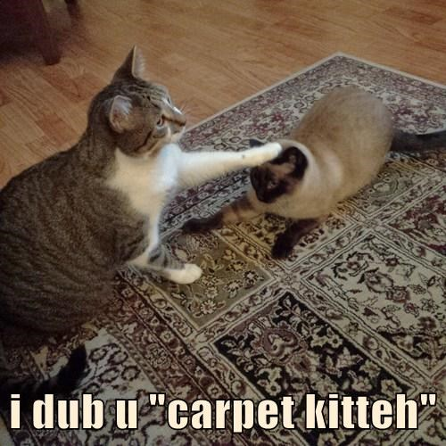 "i dub u ""carpet kitteh"""