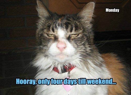 Hooray, only four days till weekend...