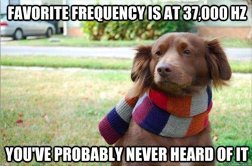 dogs,puns,emo,frequency