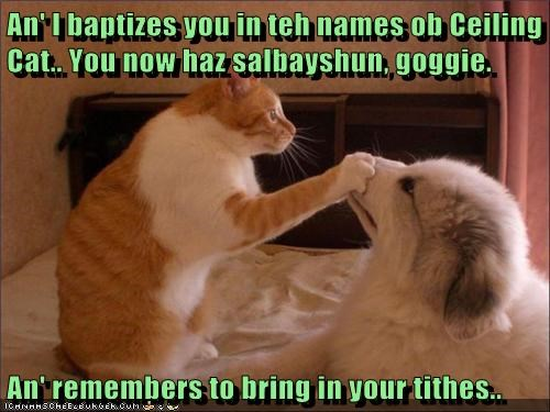 An' I baptizes you in teh names ob Ceiling Cat.. You now haz salbayshun, goggie.  An' remembers to bring in your tithes..