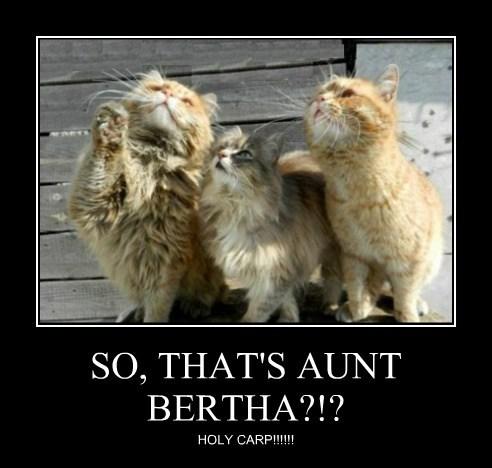 SO, THAT'S AUNT BERTHA?!?
