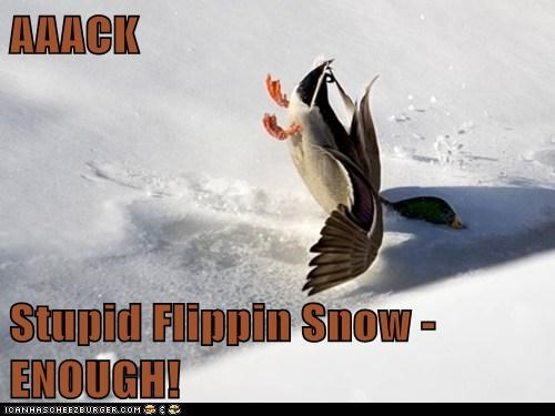 AAACK  Stupid Flippin Snow - ENOUGH!