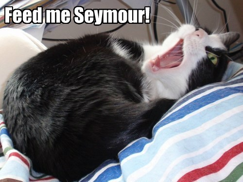 feed me seymour!