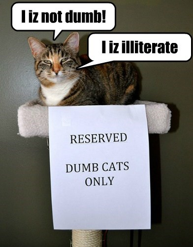 Cats can't read.