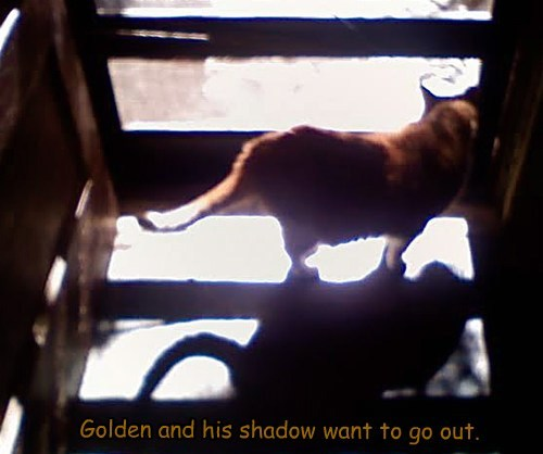 Golden And His Shadow