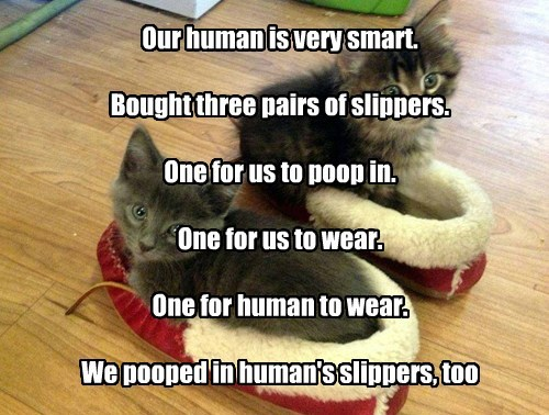 Our human is very smart.  Bought three pairs of slippers.  One for us to poop in.  One for us to wear.  One for human to wear.  We pooped in human's slippers, too