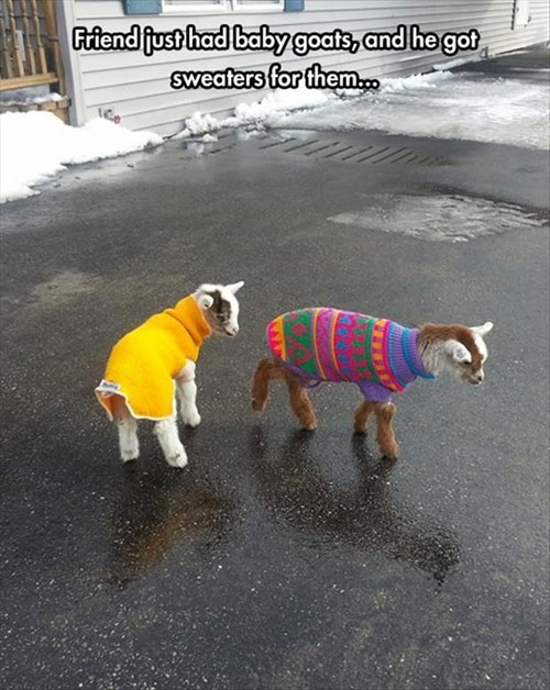 Because Your Kids Need Warm Sweaters in the Cold Weather