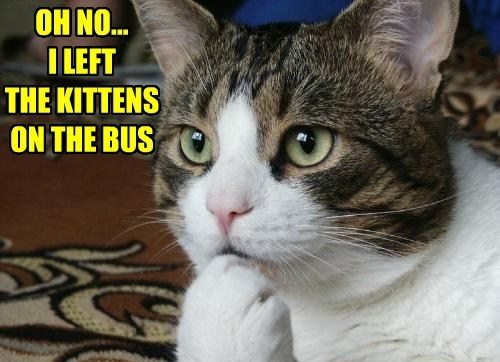 "The Kittens on the Bus Go, ""Meow, Meow, Meow!"""