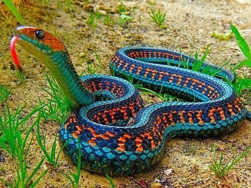 St Patrick's Day,snakes,beautiful