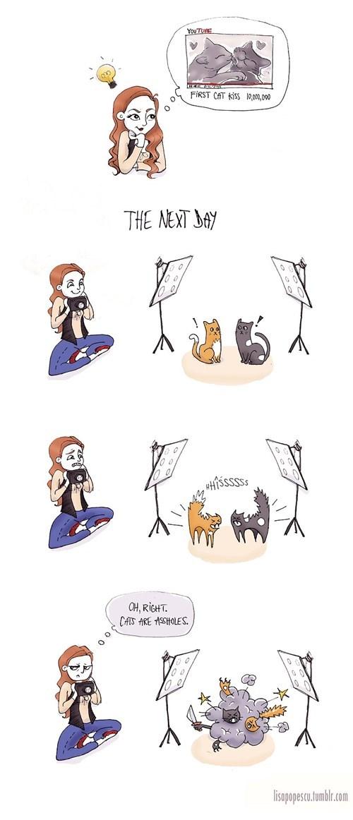 Cats,viral videos,web comics