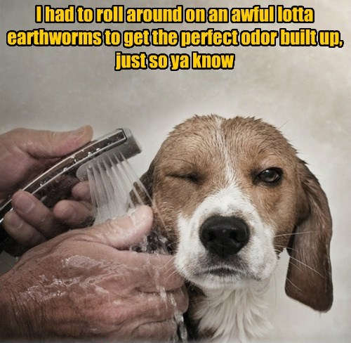 dogs,baths,stink,funny
