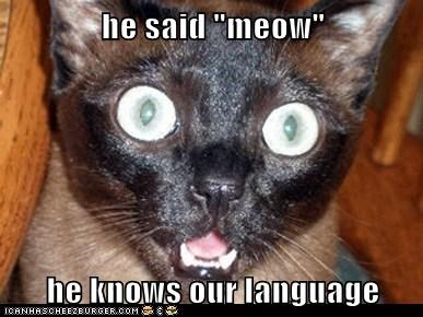 "he said ""meow""  he knows our language"