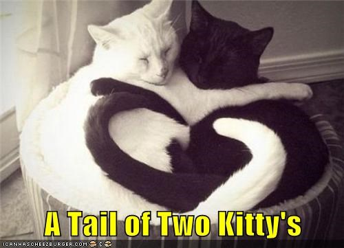A Tail of Two Kitty's