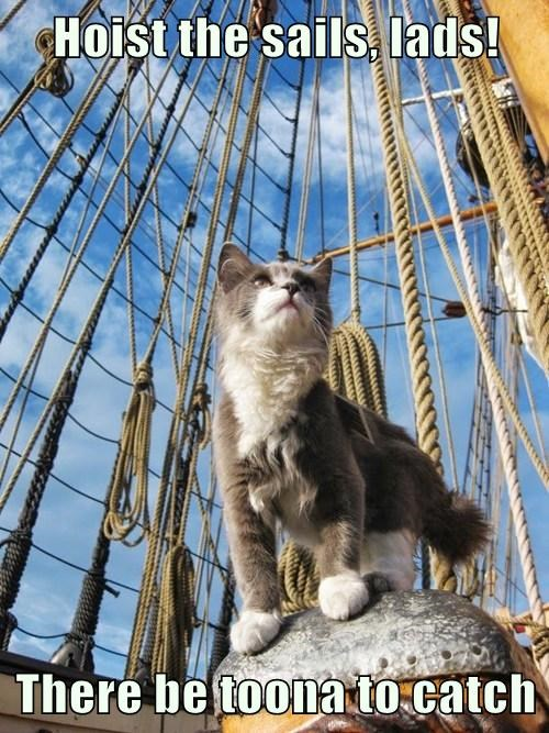 Hoist the sails, lads!  There be toona to catch