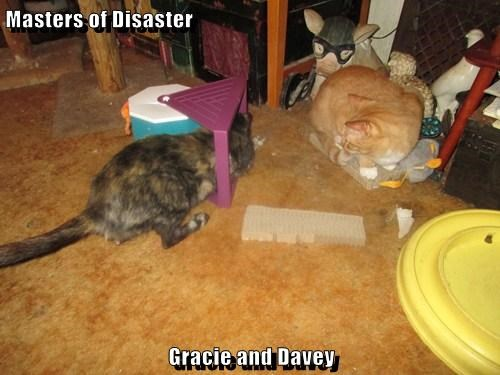 Masters of Disaster  Gracie and Davey