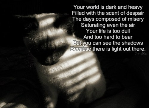 Your world is dark and heavy  Filled with the scent of despair  The days composed of misery  Saturating even the air  Your life is too dull  And too hard to bear  But you can see the shadows  Because there is light out there.