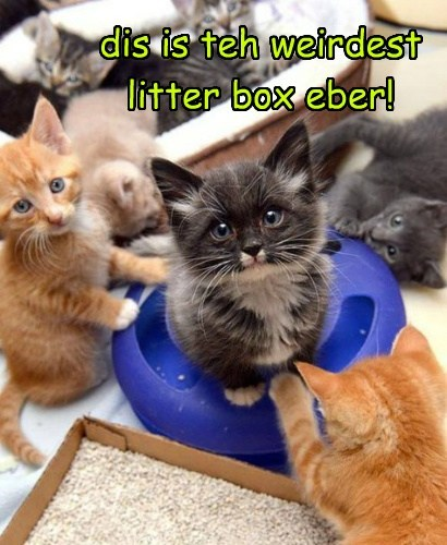 dis is teh weirdest litter box eber!