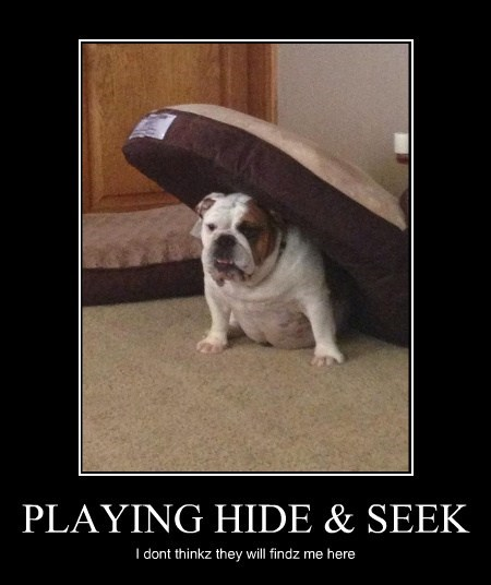 dogs,cute,hide and seek,bulldogs